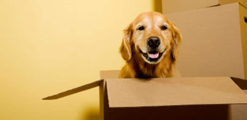 Essential Tips When It Comes To Moving With Dog